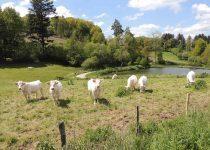 gite-la-clairiere-auvergne-gouttieres-63-nature